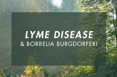 Lyme Disease and Borrelia Burgdorferi