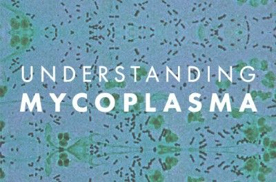 Mycoplasma, the Most Common Lyme Coinfection