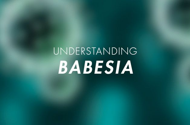 Babesia - A Lyme Disease Coinfection | RawlsMD