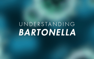 Bartonella for Lyme disease