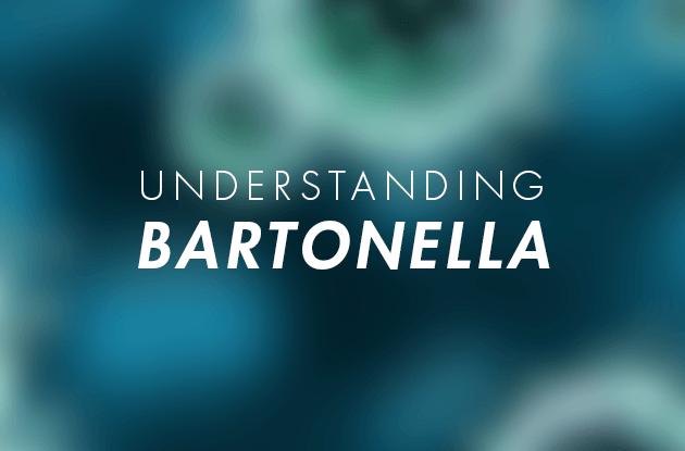 Bartonella for Lyme disease