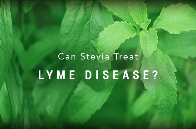 Can You Treat Lyme Disease Naturally