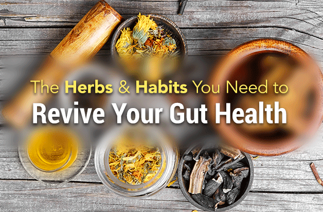 The herbs and habits you need to revive gut health