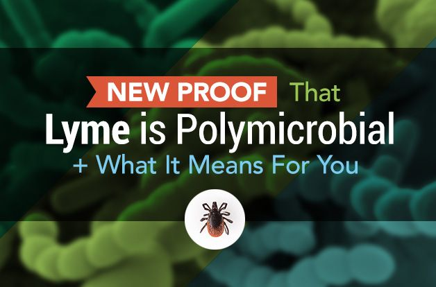 New Proof That Lyme is Polymicrobial + What It Means For You