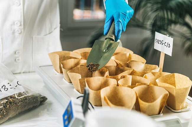 soil testing for cbd hemp safety. Biologist's hand with protective gloves holding spatula with soil above samples separated in small containers.