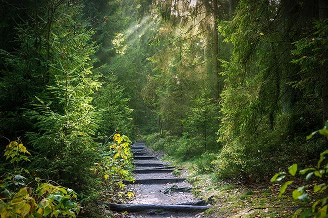 deep, green forest with marked out, gravel path.