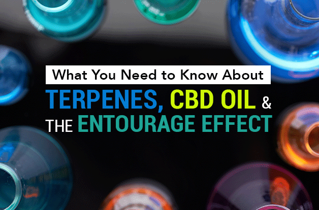 What You Need to Know About Terpenes, CBD Oil, and the Entourage Effect, terpenes cbd oil entourage effect