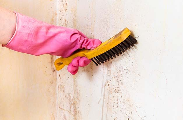 cleaning of room wall from mold with metal brush