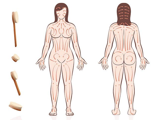drawing of woman body with circular arrows overly for dry brushing motions
