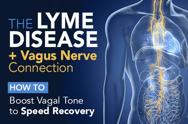 The Lyme Disease + Vagus Nerve Connection