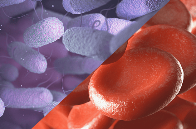 split image. bartonella on left, red blood cells on right