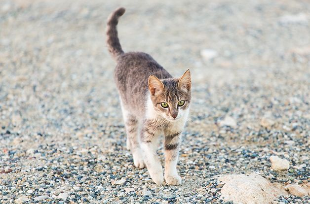 Concept of homeless animals - young Stray cat on the street.