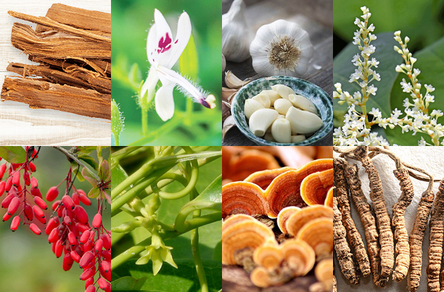 image in grid of eight, cats claw, andrographis, garlic, japanese knotweed, berberine, sarsaparilla, reishi mushroom, cordyceps