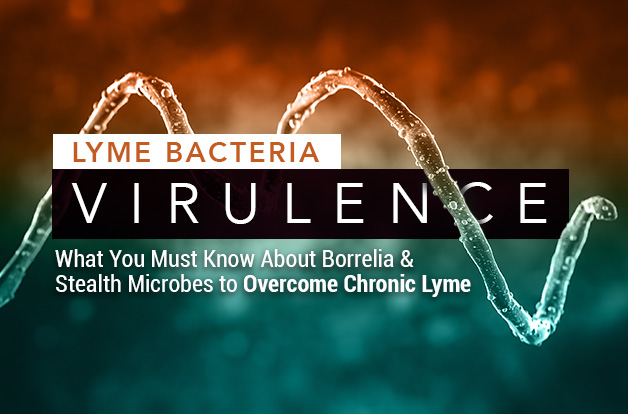 Lyme Bacteria Virulence: What You Must Know About Borrelia