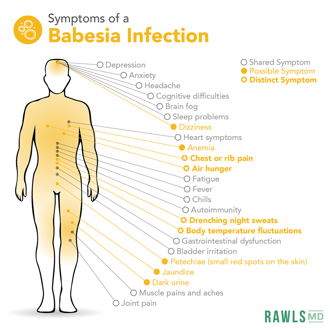 symptoms of babesia infection: depression, anxiety, headache, cognitive difficulties, brain fog, sleep problems, dizziness, heart symptoms, anemia, chest or rib pain, air hunger, fatigue, fever, chills, autoimmunity, drenching night sweats, body temperature fluctuations, gastrointestinal dysfunction, bladder irritation, petechiae, jaundice, dark urine, muscle pain, joint pain