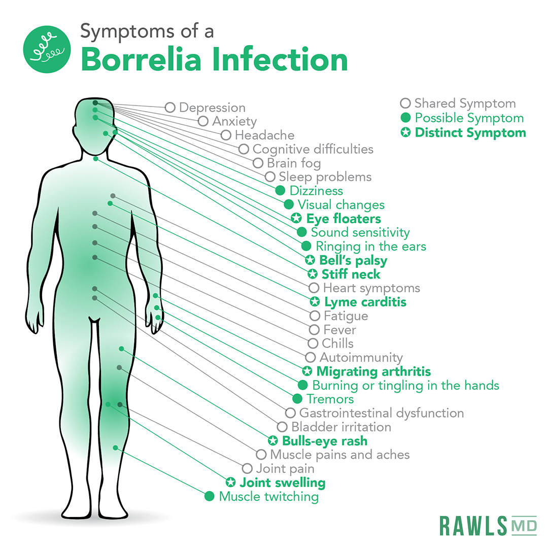 symptoms of borrelia infection: depression, anxiety, headache, cognitive difficulties, brain fog, sleep problems, dizziness, visual changes, eye floaters, sound sensitivity, ringing in ears, bells palsy, stiff neck, heart symptoms, lyme cariditis, fatigue, fever, chills, autoimmunity, migrating arthritis, burning or tingling hands, tremors, gastrointestinal dysfunction, bladder irritation, bulls eye rash, muscle pain, joint pain, joint swelling, muscle twitching